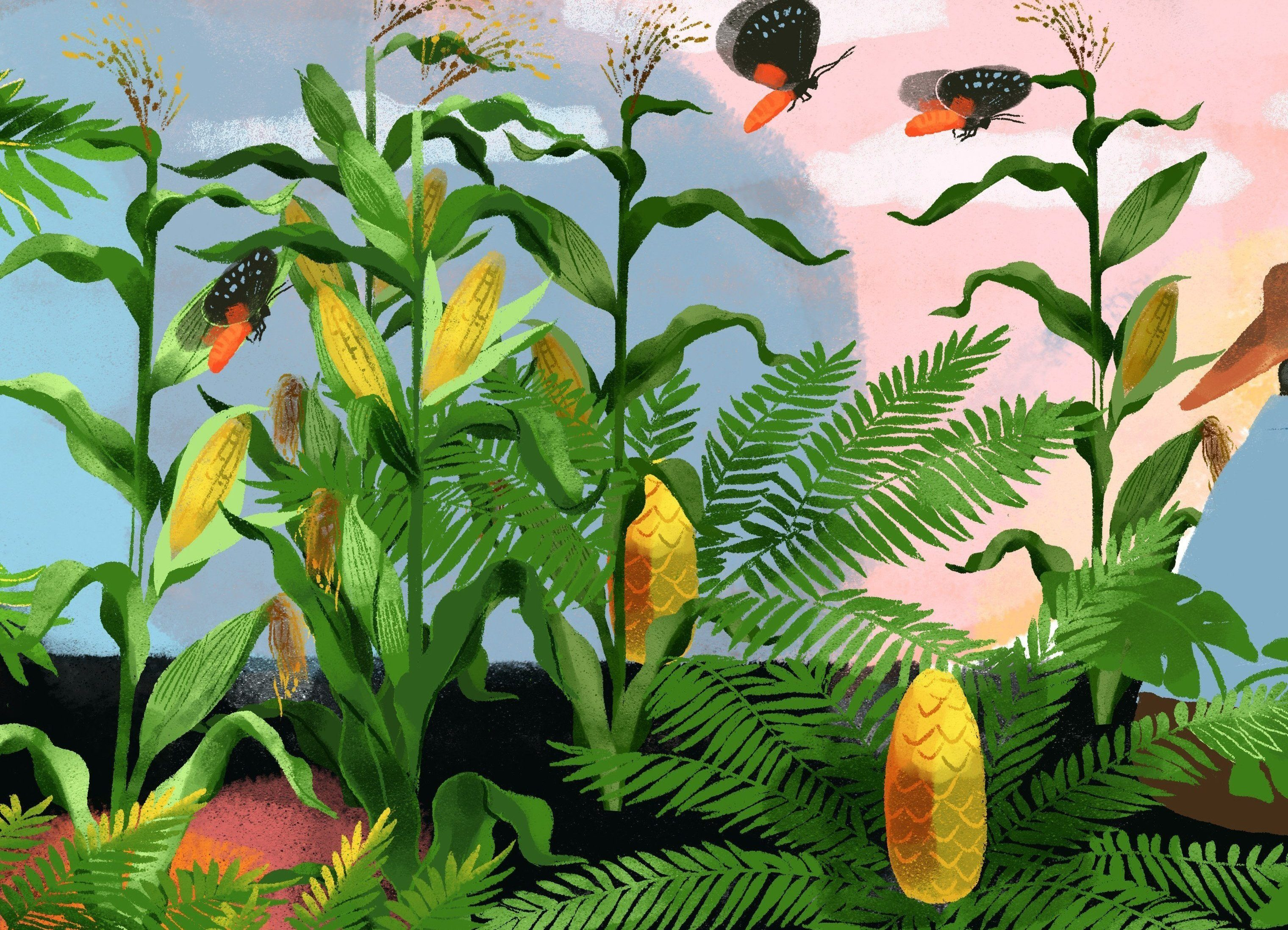 cycadBanner_v05_04_copped_corn